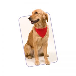 collier bandana